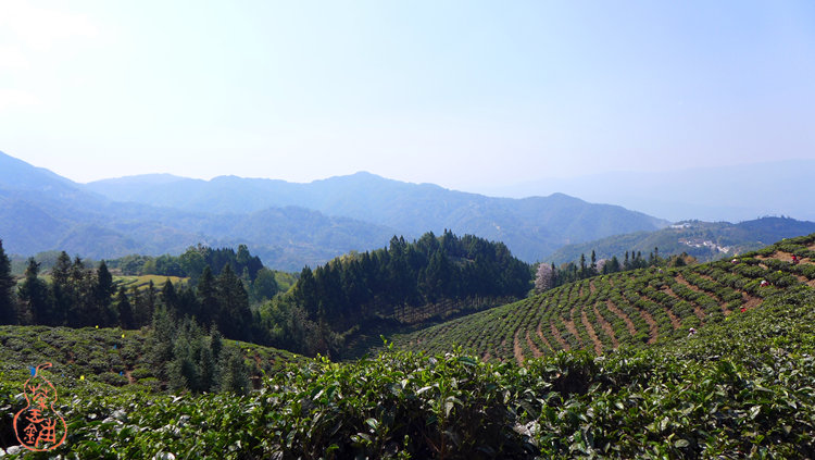 Huilong Tea Garden