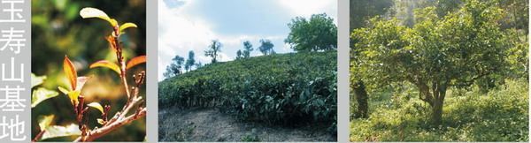 plantation-yushou