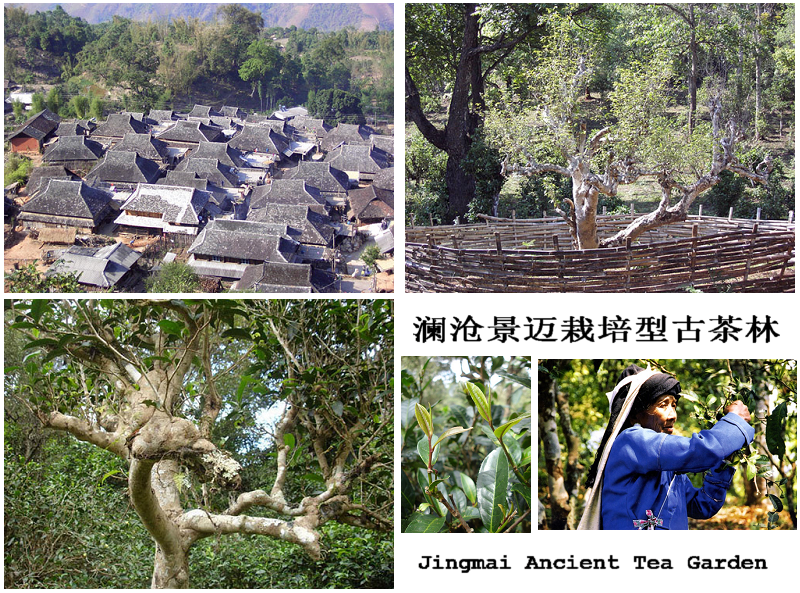 Lancang Ancient Tea Factory