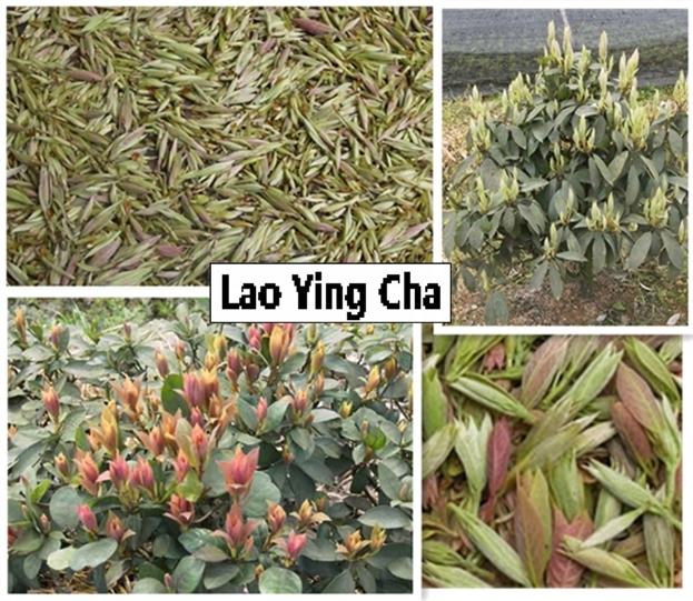 laoyingcha